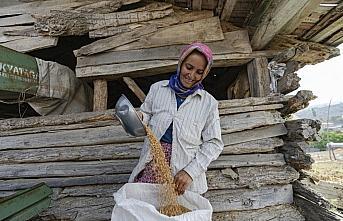 Tarım makinelerinin giremediği tarlaları kadınlar...