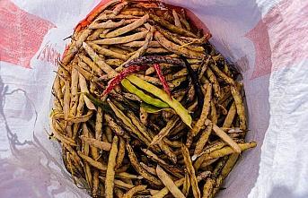 Akkuş şeker fasulyesinin hasadına başlandı