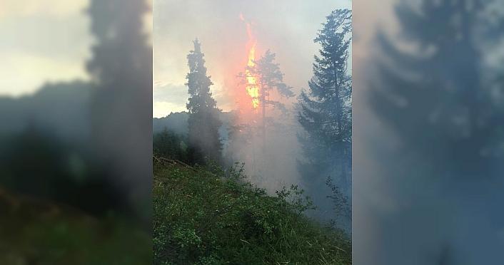 Artvin'de çıkan yangında 4 hektar orman zarar gördü
