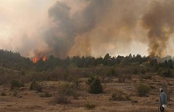 Bolu'da çıkan orman yangınına müdahale ediliyor
