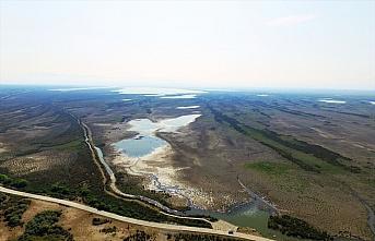 Kızılırmak Deltası'nda yağış azlığından kaynaklı kuraklık tehdidi