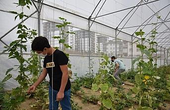 Samsun'da ortaokul öğrencileri organik tarımı...