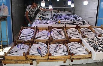 Sinop'ta denize açılan balıkçılar limana 600...