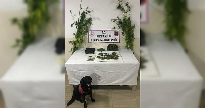 Sinop'ta narkotik köpeği