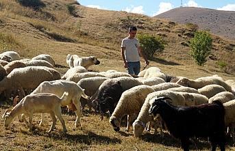 Taksitle aldığı koyunlarla köyüne yerleşti,...