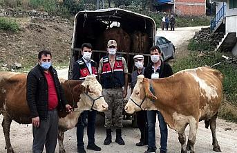 Tokat'ta hayvan hırsızlığı iddiasıyla yakalanan 3 zanlıdan biri tutuklandı