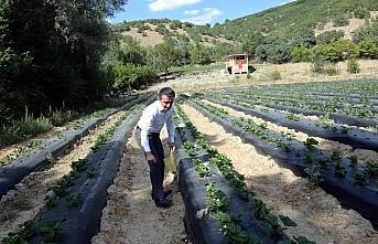 Yeşilyurt ilçesinde çiftçilerin yeni gözdesi...