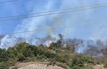 Zonguldak'ta çalılık yangını kontrol altına alındı