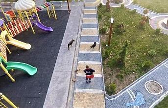 Bekçi köpeği, belediye temizlik işçisinin can dostu oldu