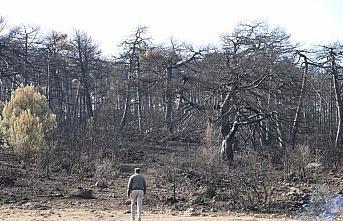 Bolu'da yanan ormanlık alan ağaçlandırılacak