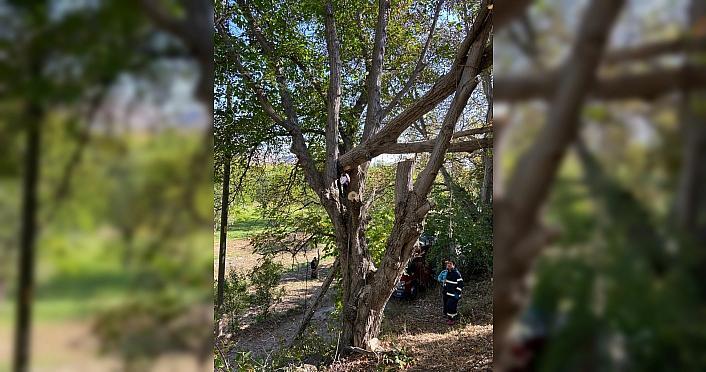 Gümüşhane'de ağaçta sıkışan kişi kurtarıldı
