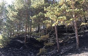 Kastamonu'da çıkan örtü yangını söndürüldü
