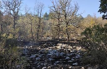 Kastamonu'da orman yangınında 5 hektar alan zarar gördü