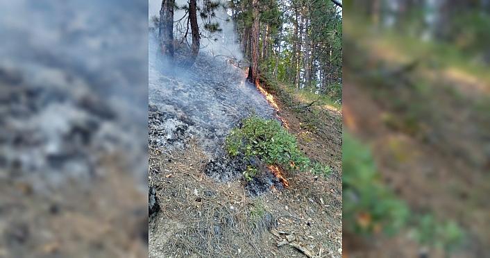 Kastamonu'da yıldırım düşmesi sonucu çıkan orman yangınında 1 hektar alan zarar gördü