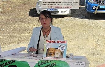 Kavak'ta sokak hayvanları için