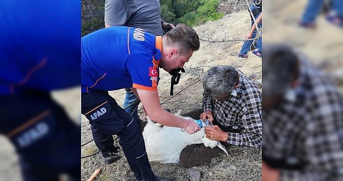 Kayalık alanda mahsur kalan keçi kurtarıldı