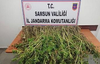 Samsun'da uyuşturucu operasyonlarında 13 kişi yakalandı
