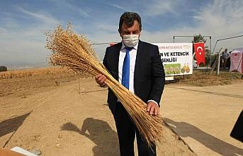 Türkiye'nin ilk yerli ve milli liflik keten tohumu