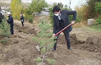 11 Kasım Milli Ağaçlandırma Günü