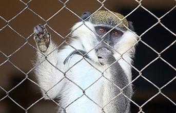 Düzce'de bahçede bulunan maymun koruma altına alındı