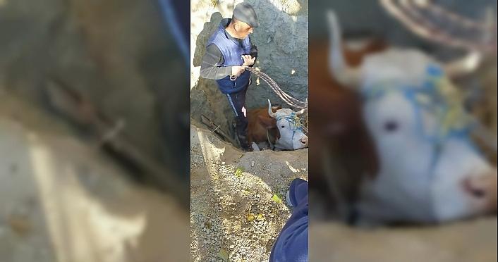 Karabük'te kuyuya düşen inek, AFAD ve itfaiye ekiplerince...