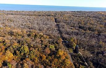 Kızılırmak Deltası Kuş Cenneti'nde sonbahar manzaraları