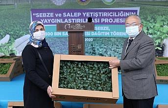 Ordu'da üreticilere 1 milyon kışlık sebze ve 300 bin salep fidesi dağıtıldı