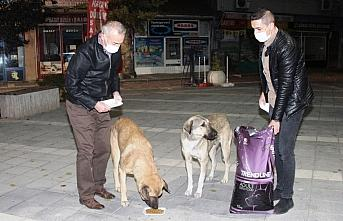 Taşova Belediye Başkanı Öztürk, sokak hayvanlarını besledi