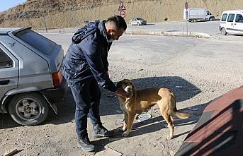 Bolu'da yardımseverler sokak hayvanlarını unutmuyor