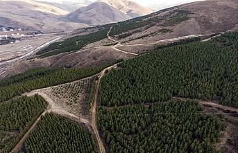 Çorak ve dağlık arazi 25 yılda 1 milyon ağaçlı...