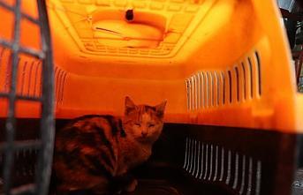 Düzce'de hafif ticari aracın yedek lastik kısmına giren kedi yavrusu kurtarıldı