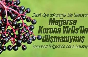 Kara Mürver faydası, karamürver yani elderberry...