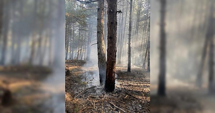 Kastamonu'da çıkan orman yangını kontrol altına...