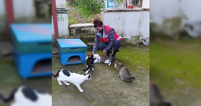 Keşap Belediyesinden sokak hayvanları için mama...