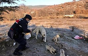 Sakarya, Bolu ve Karabük'te sokak hayvanları sokağa...