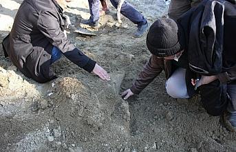 Amasya'da mamutlara ait olduğu değerlendirilen fosiller bulundu
