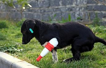 Bacağı kesilen sokak köpeği 3 boyutlu yazıcıdan...