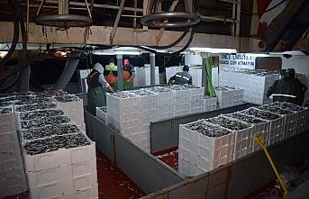 Batı Karadeniz'de balıkçılar hamsi bolluğuyla...