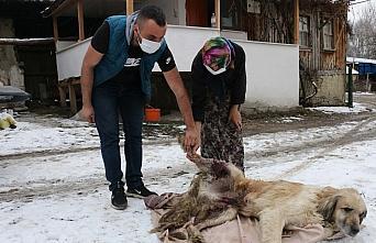 Bolu'da av tüfeğiyle vurulan köpek tedavi altına alındı