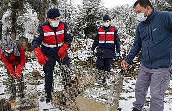 Bolu'da bulunan 3 yaralı şahin tedavi edilerek doğaya bırakıldı