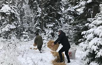 Bolu'da yabani hayvanlar için doğaya yem bırakıldı