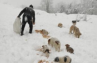 Düzce'de belediye ekipleri sokak hayvanlarını unutmadı