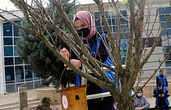 Düzce'de genç gönüllüler kuşlar için yuva yaptı