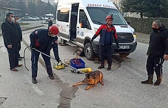 Düzce'de servis minibüsünün altında kalan yaralı köpek kurtarıldı