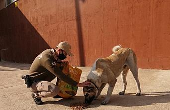 Giresun'da sokak hayvanlarını kısıtlamada polisler...