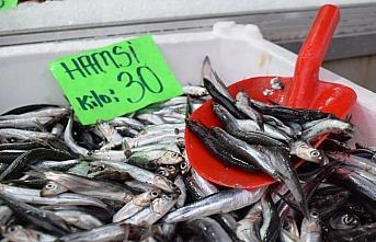 Hamsi avcılığında kısmi durdurma kararının uzatılması Düzce'de fiyatları yükseltti