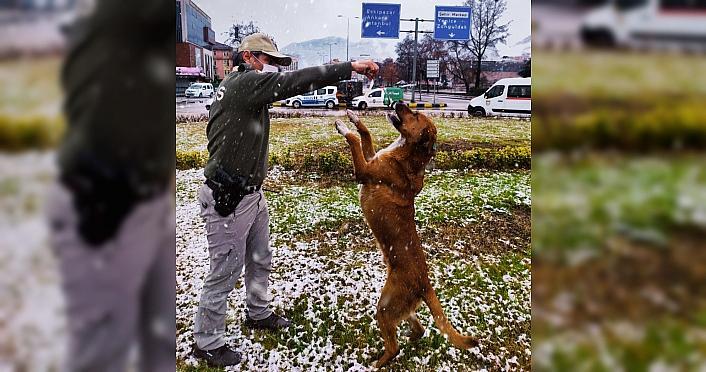 Karabük'te karda yiyecek bulmakta güçlük çeken sokak hayvanları beslendi