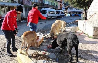 Karabük'te sokak hayvanları kısıtlamada unutulmadı