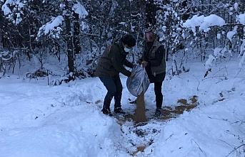 Karabük'te yabani hayvanlar için doğaya yem bırakıldı