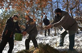Kastamonu'da yaban hayatı için doğaya yem bırakıldı